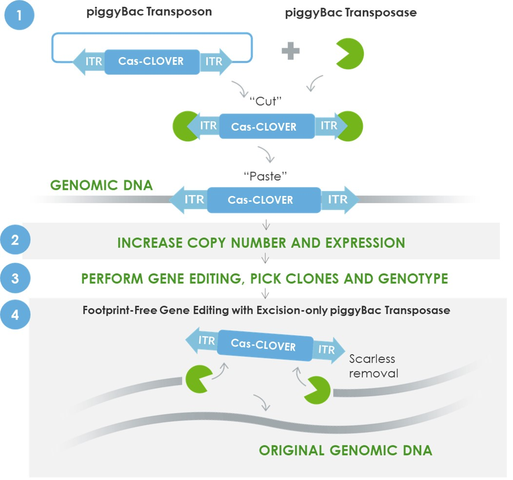 Footprint-free gene editing image v2 jpeg