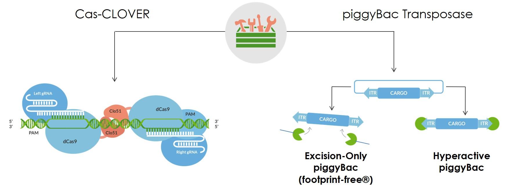 Genome editing toolbox image jpeg