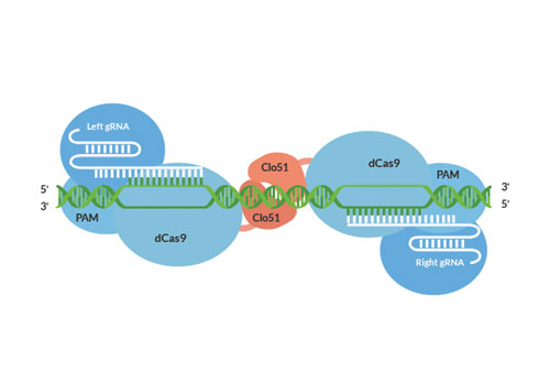 gene editing diagram with incomplete labels (500 x 350)