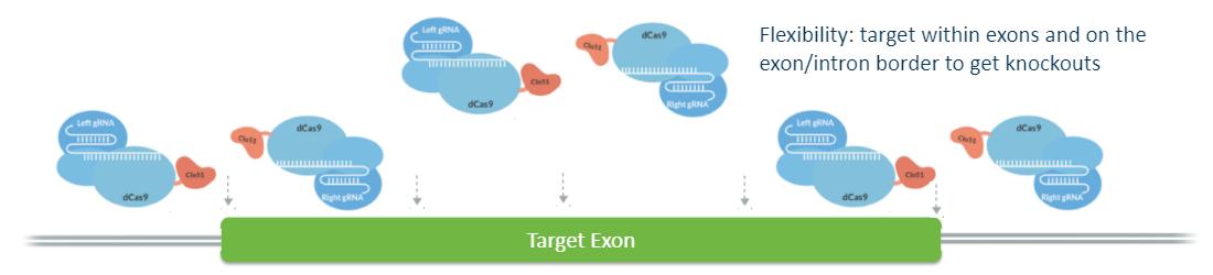diagram showing target exon