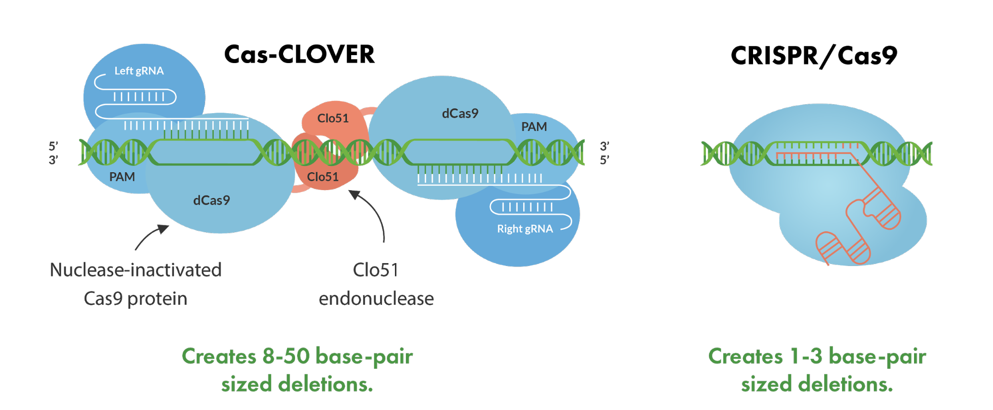 difference of created base-pair sized deletions between Cas-CLOVER and CRISPR/Cas9