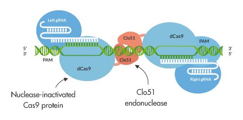 gene editing diagram