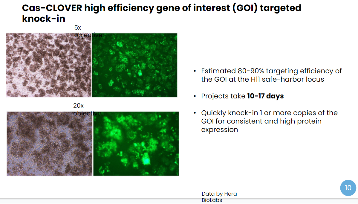 comparison between 5x objective and 20x objective gene of interest (GOI) targeted knock-in